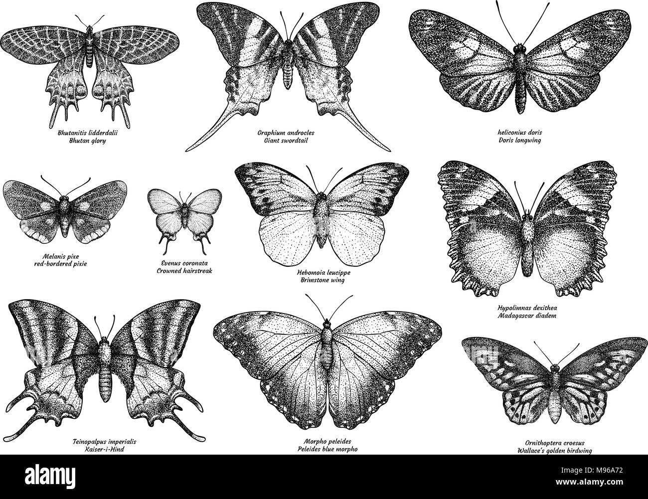 Tropical butterfly collection, illustration, drawing, engraving, ink, line art, vector - Stock Vector