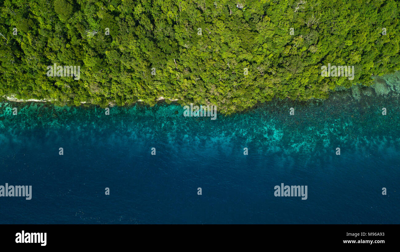 A drone photo looking down on a lush green tropical forest next to a azure blue coral reef in Aljui Bay, Waigeo, Raja Ampat Marine Park, Indonesia. - Stock Image
