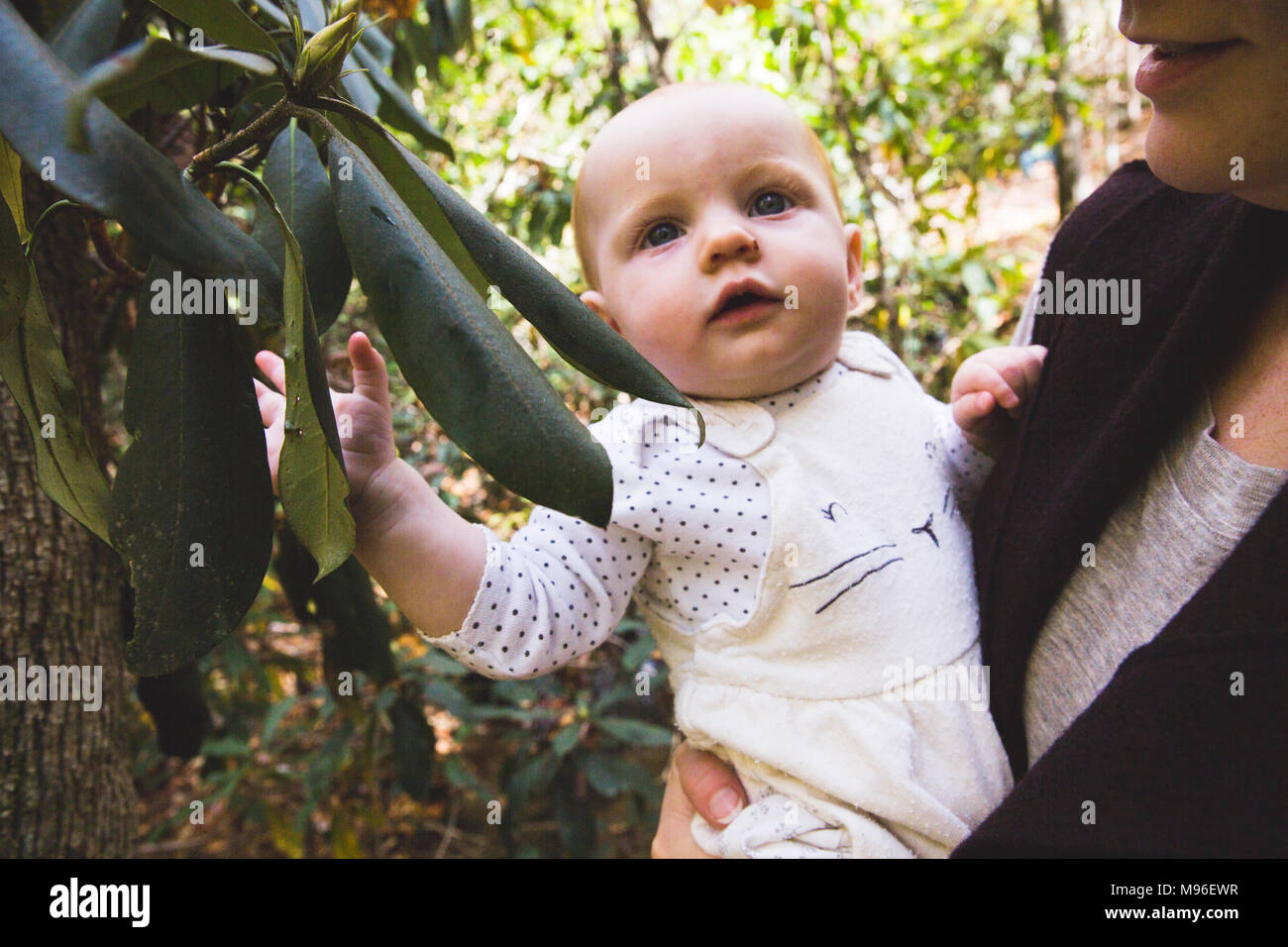 Baby being held next to rhododendron - Stock Image