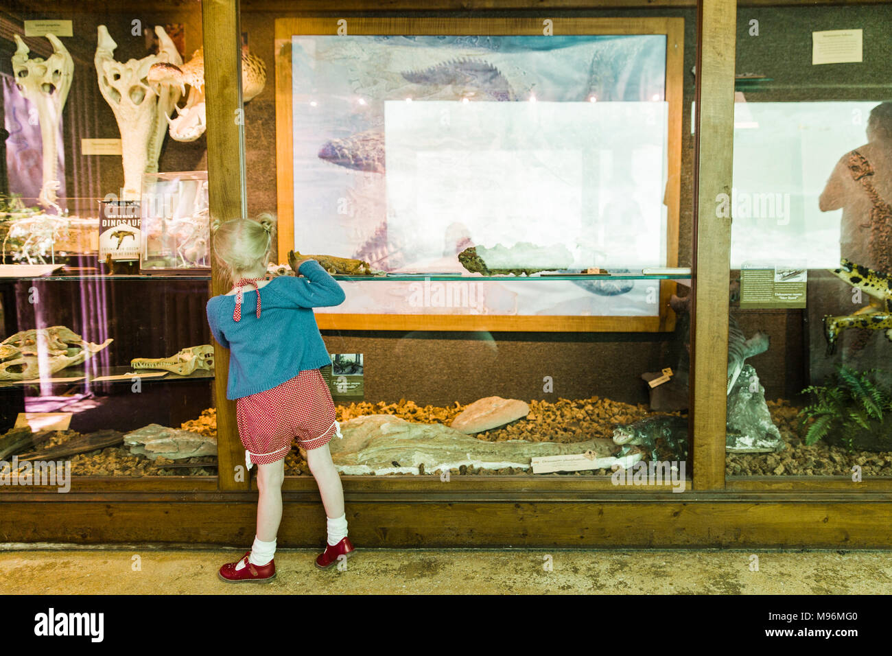 Girl looking at museum exhibit - Stock Image