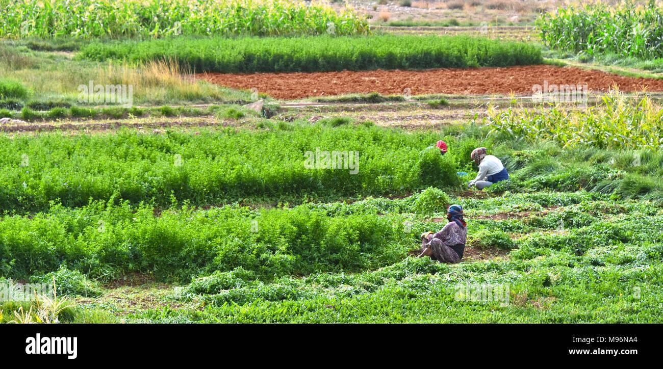 Intensive Farming Stock Photos & Intensive Farming Stock Images - Alamy
