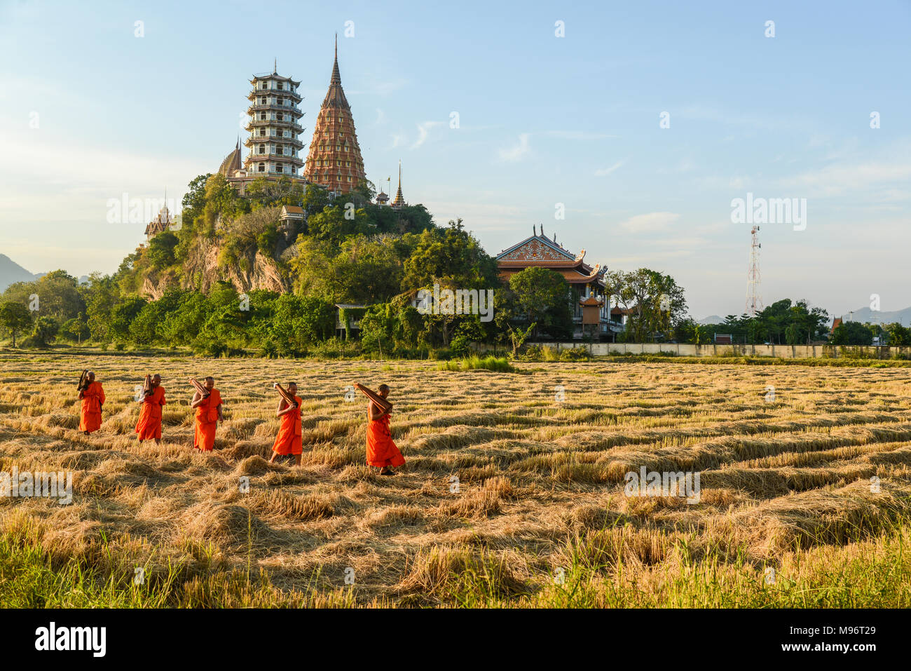 Kanchanaburi, Thailand - December 14, 2014: Monks with long-handled umbrella hiking on harvested rice farm in Kanchaburi, Thailand - Stock Image