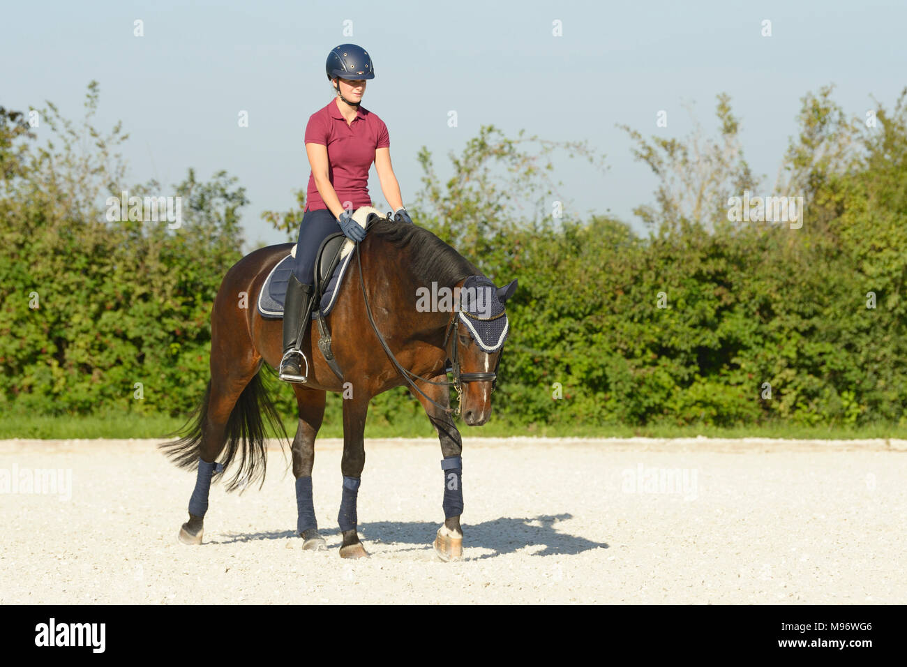 Dressage riding, walking with long reins - Stock Image
