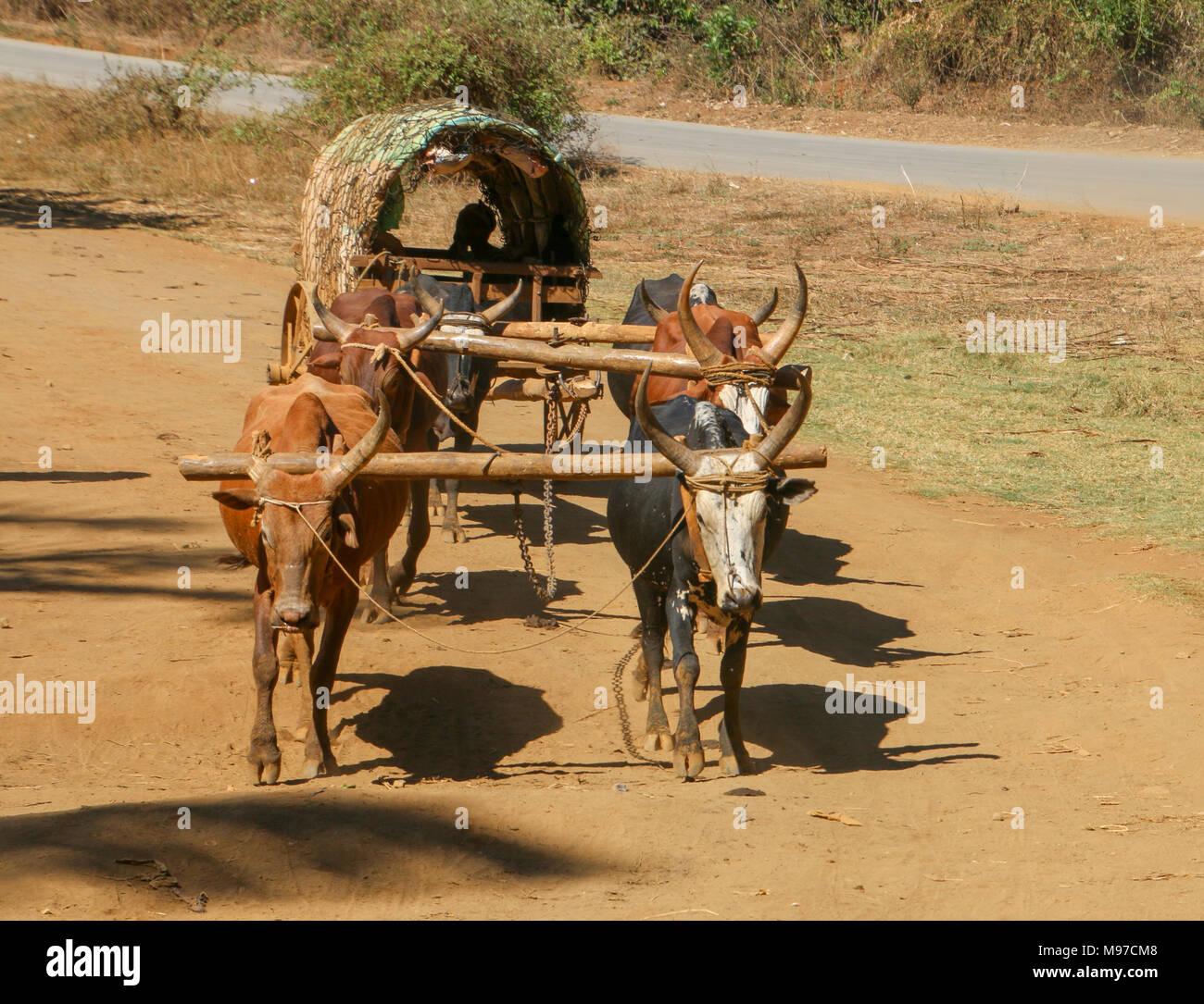 Madagascar, Anosy region, near Tolagnaro (Fort Dauphin) Oxen cart - Stock Image