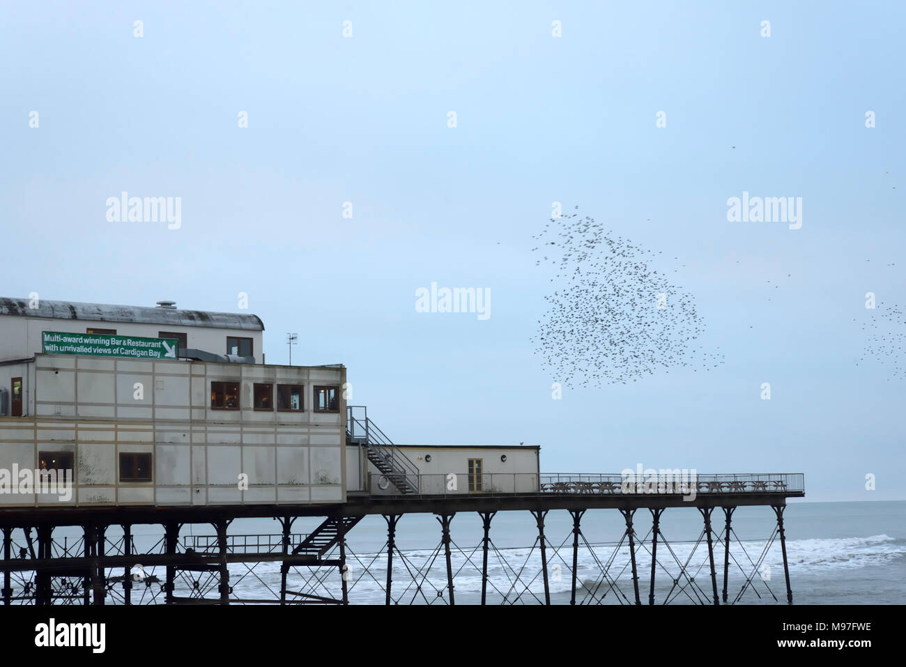Starling Flock over Aberystwyth Pier - Stock Image