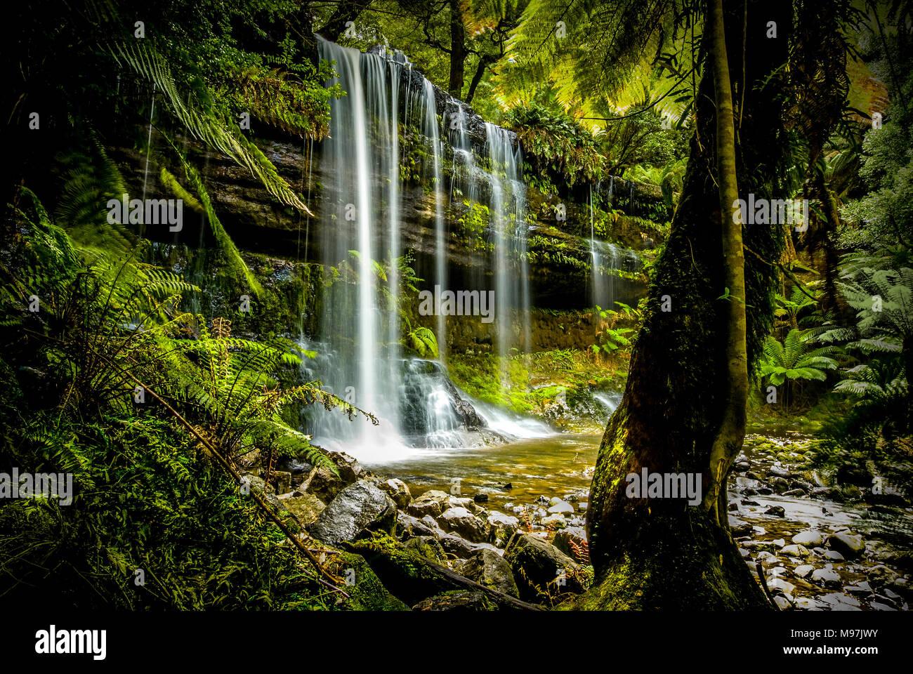 Australien, Tasmanien, Urwald, Wasserfall, Wasser, Russell Falls, Mount Field National Park - Stock Image