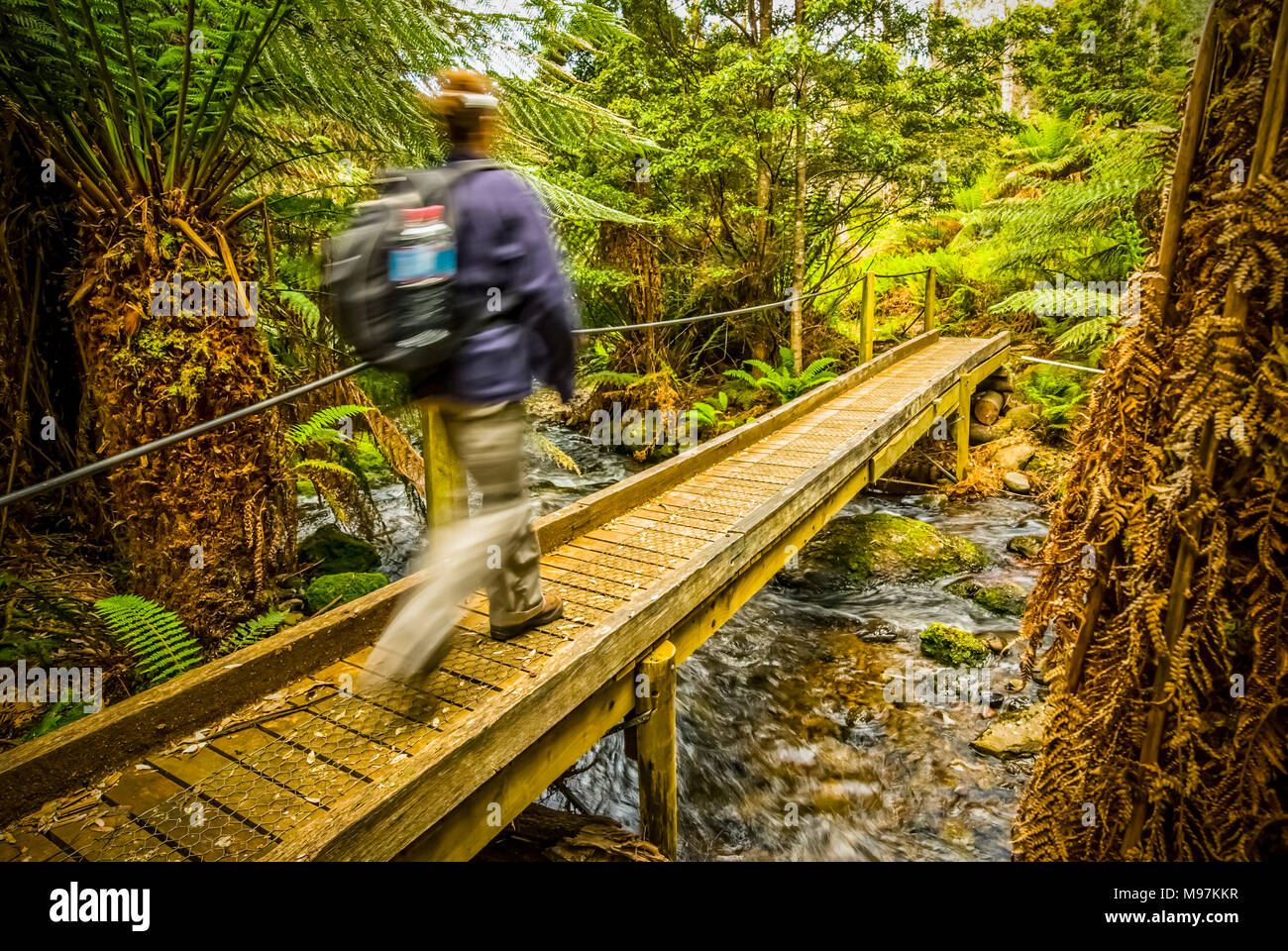 Australien, Tasmanien, Lemonthyme Lodge, Rundweg, Schützgebiet - Stock Image