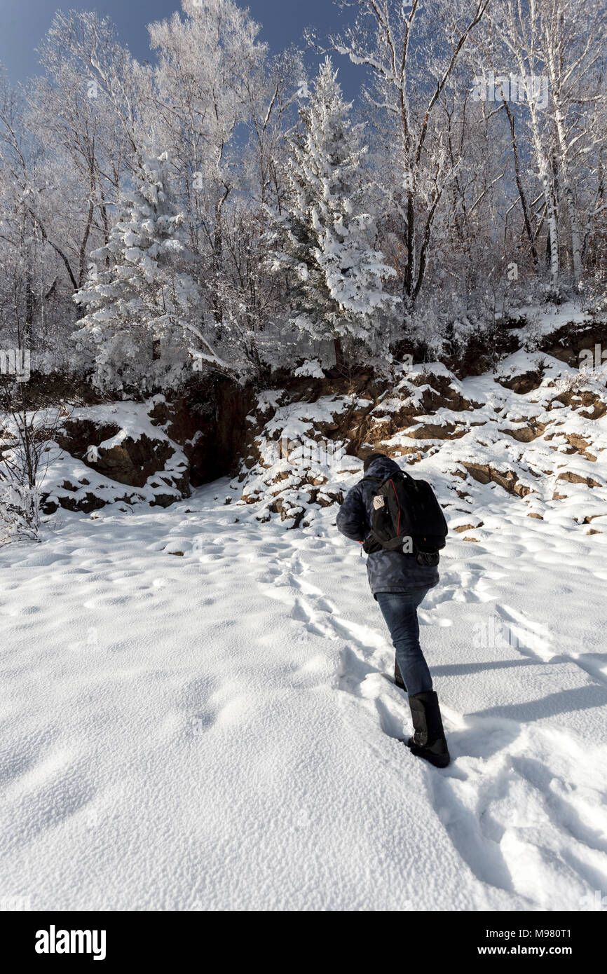 Russia, Amur Oblast, back view of man walking in snow-covered nature - Stock Image