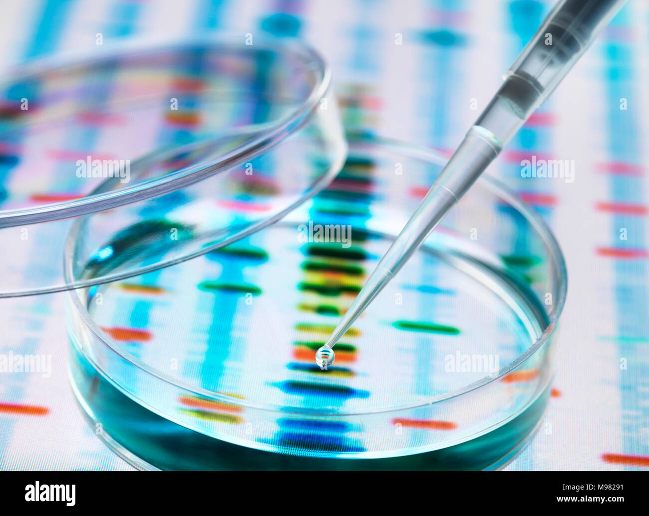 Sample of DNA being pipetted into a petri dish over genetic results Stock Photo