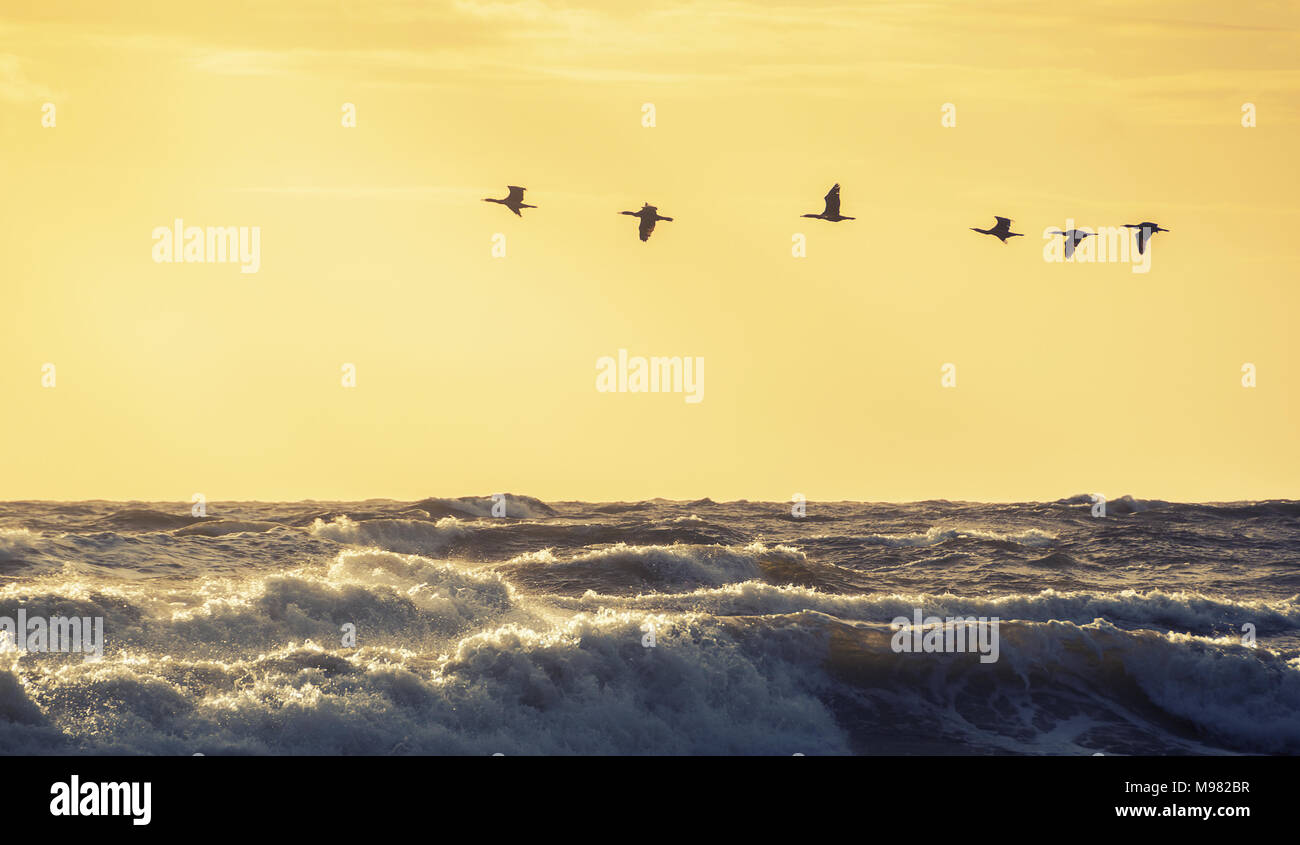 Flying Ducks Stock Photos & Flying Ducks Stock Images - Alamy