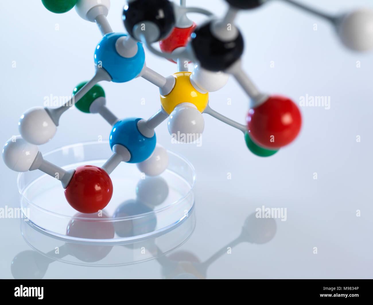 Molecular model in petri dish - Stock Image