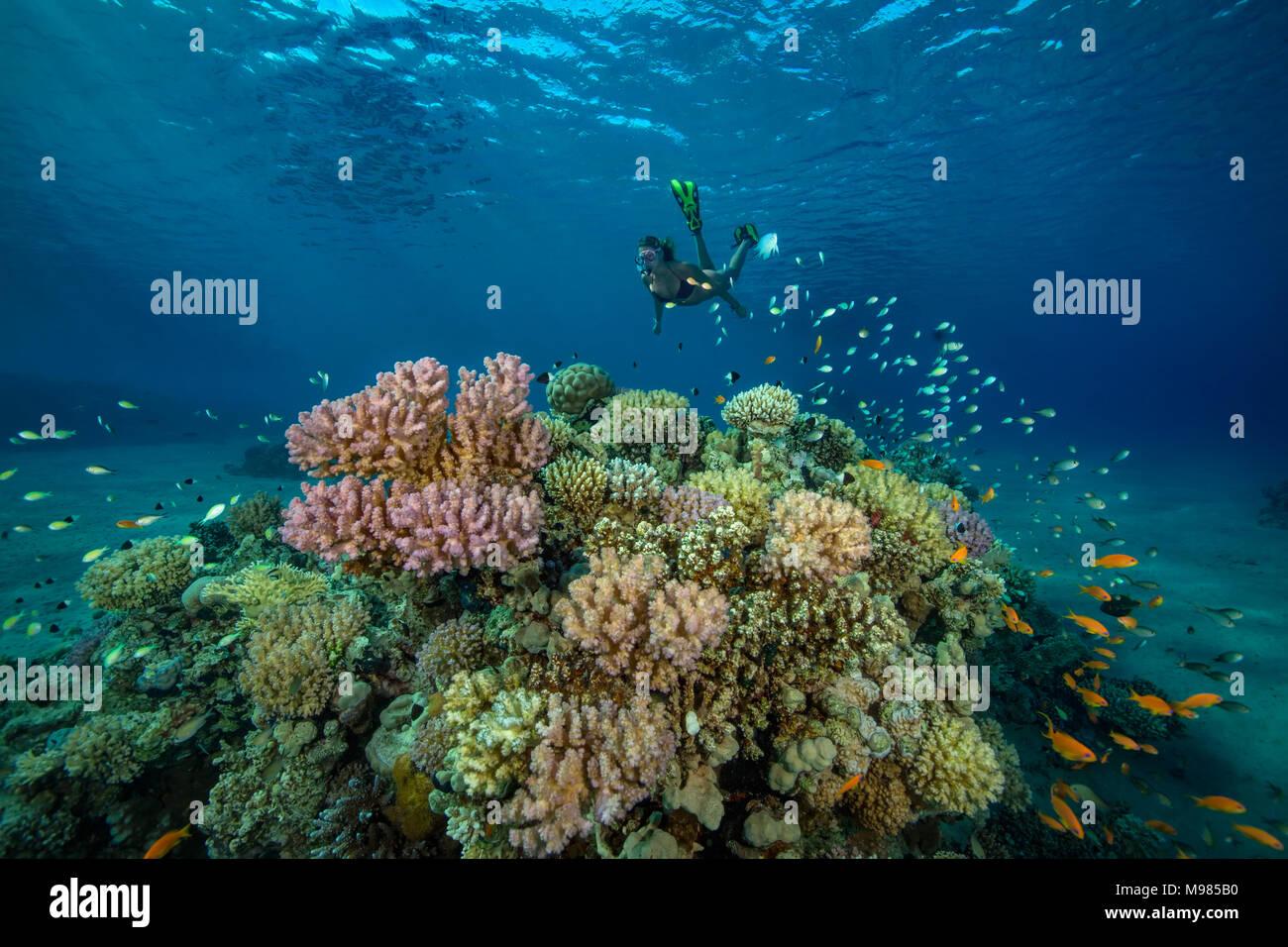 Egypt, Red Sea, Hurghada, teenage girl snorkeling at coral reef - Stock Image