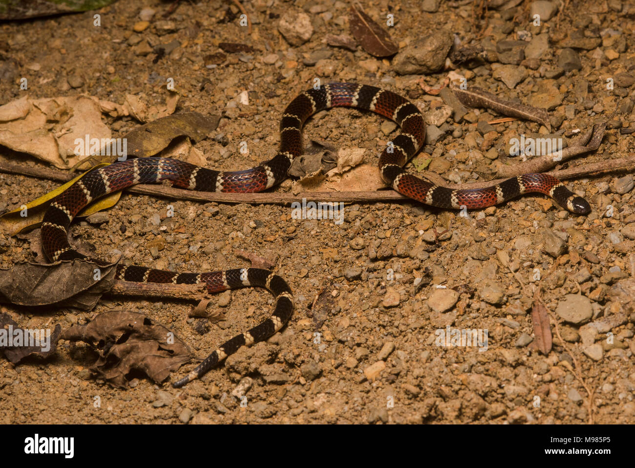 Touch Snake Stock Photos & Touch Snake Stock Images - Alamy