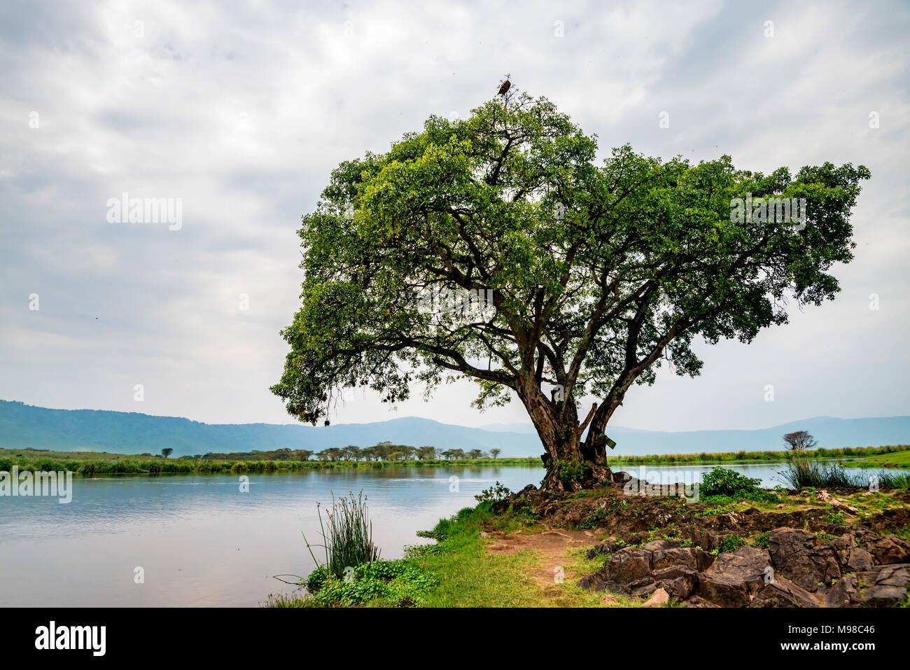 Scenic savannah landscape - Stock Image