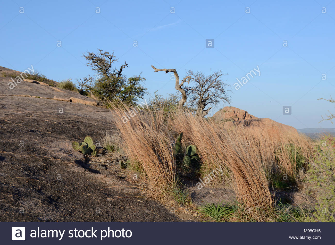 Enchanted Rock Landscape. Trees and dead grass, Enchanted Rock in the Texas Hill Country. Granite dome near Fredericksburg and Llano in Central Texas. - Stock Image