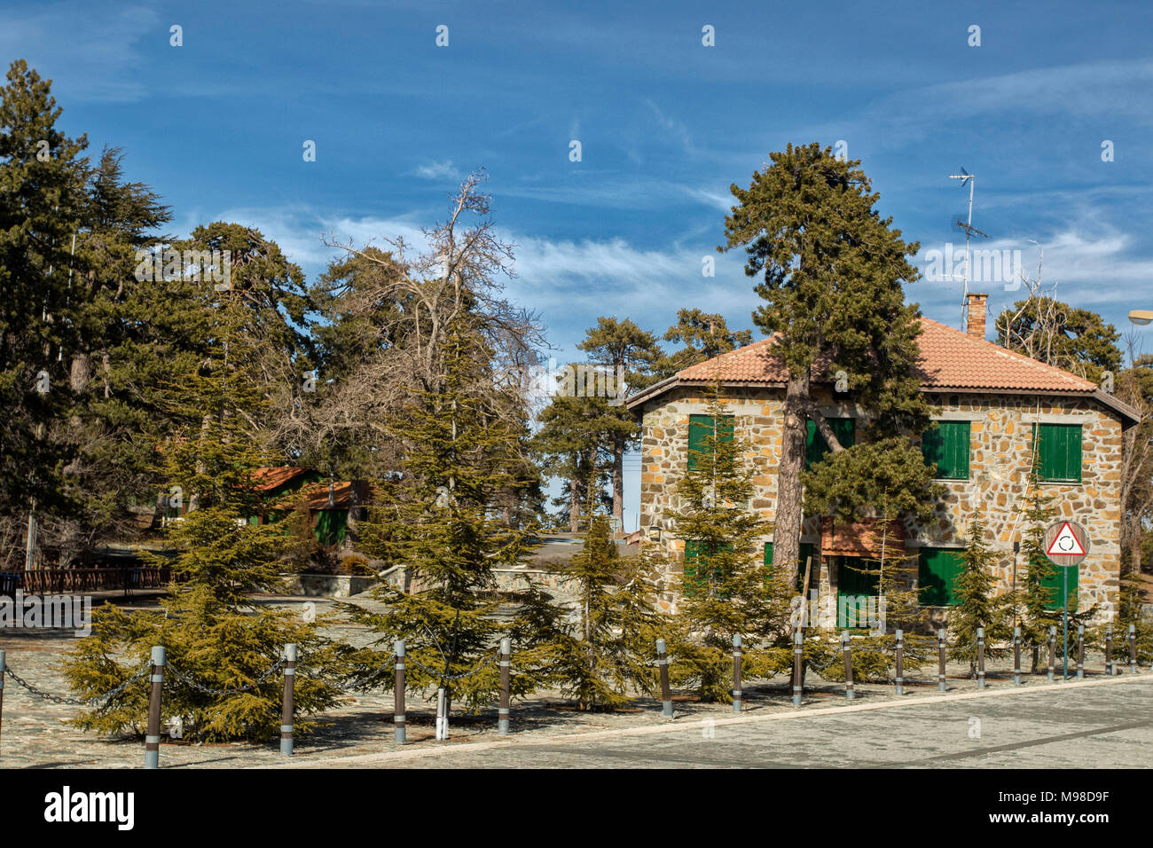 Black pine trees in spring on the road from troodos square to mount olympus, limassol district, cyprus, europe Stock Photo