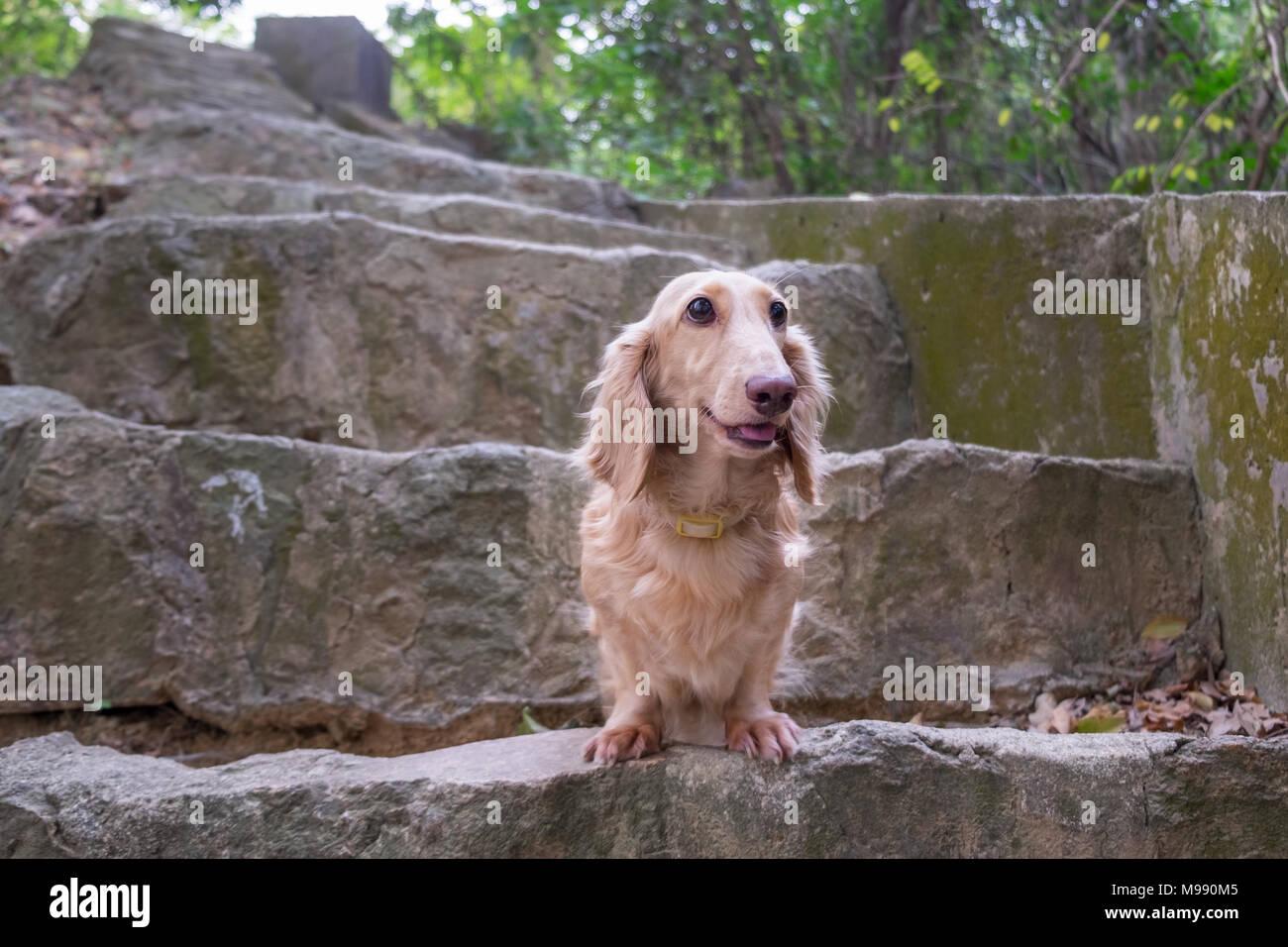 Sitting canine dog most popular dog stock photos sitting for Dog day sitting