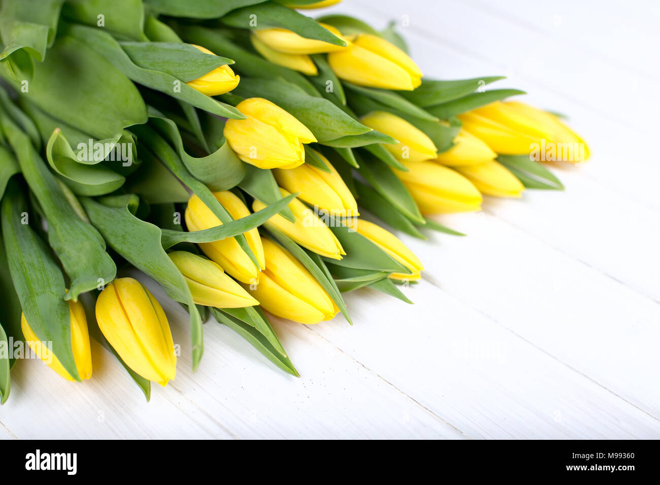 Bright Flowers With Greenery Stock Photos Bright Flowers With