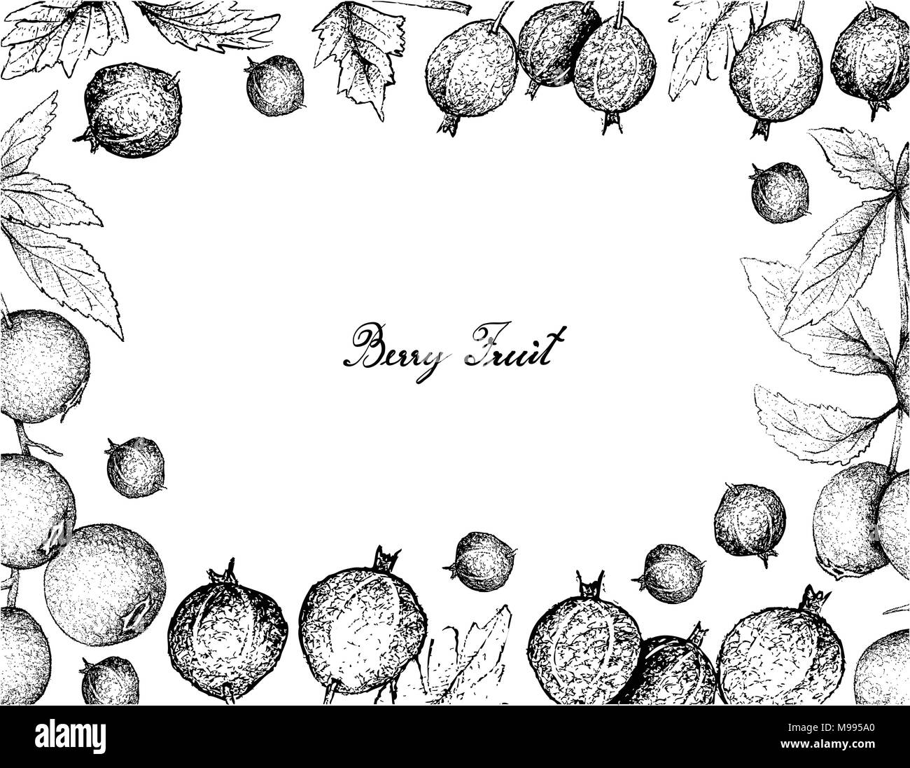 Berry Fruits, Illustration Frame of Hand Drawn Sketch Fresh Black Velvet Gooseberry or Ribes Oxyacanthoides Fruit Isolated on White Background. - Stock Vector