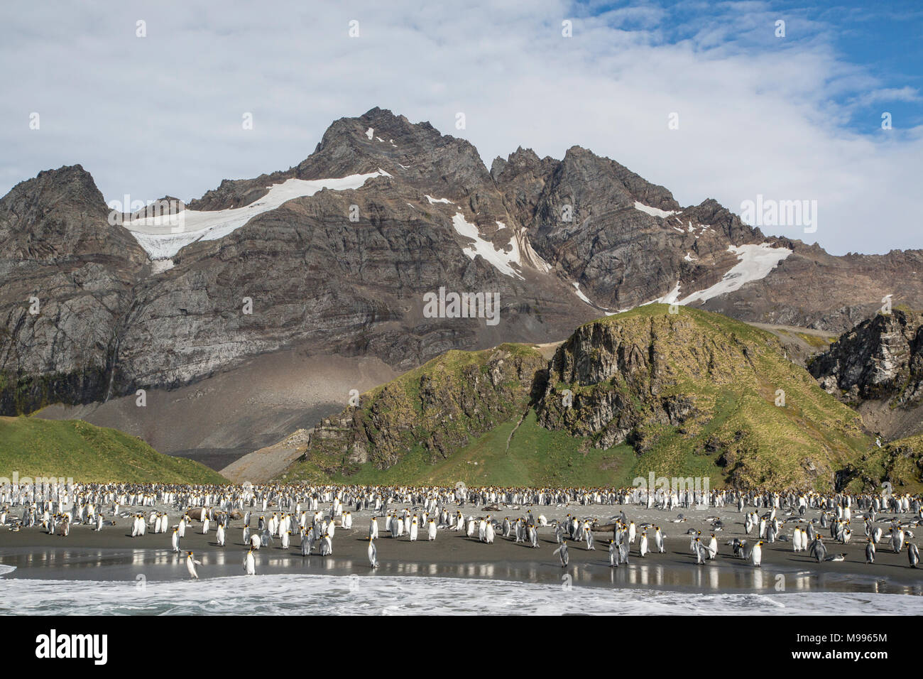 view of Gold Harbour, South Georgia., showing glacier and king penguin rookery - Stock Image