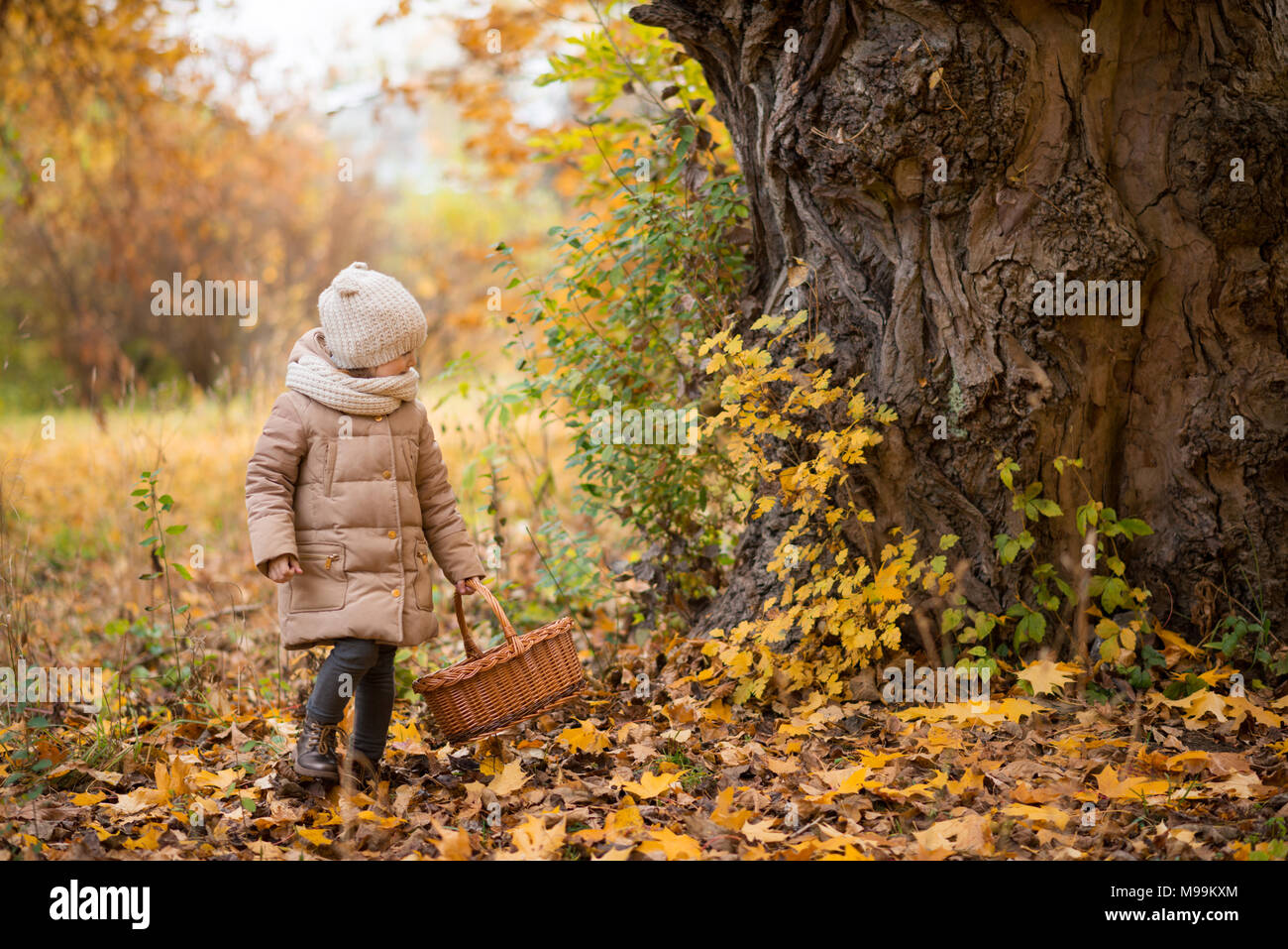 Girl collects chestnuts or mushrooms in a basket in the autumn forest - Stock Image