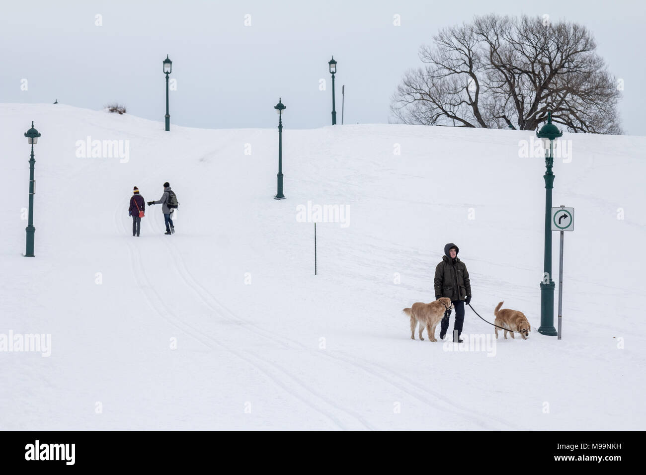 QUEBEC, CANADA - DECEMBER 26, 2016: Man walking a dog in the plains of Abraham (Plaines d'Abraham) under heavy snow during the Canadian winter.   Pict - Stock Image
