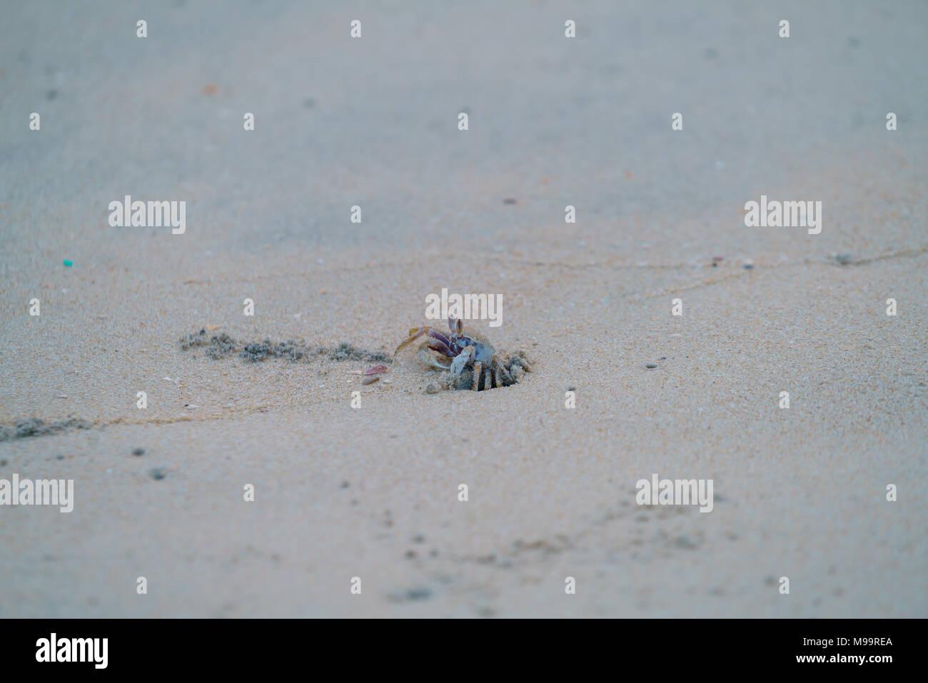 Beach Crab India Asia Kerala - Stock Image