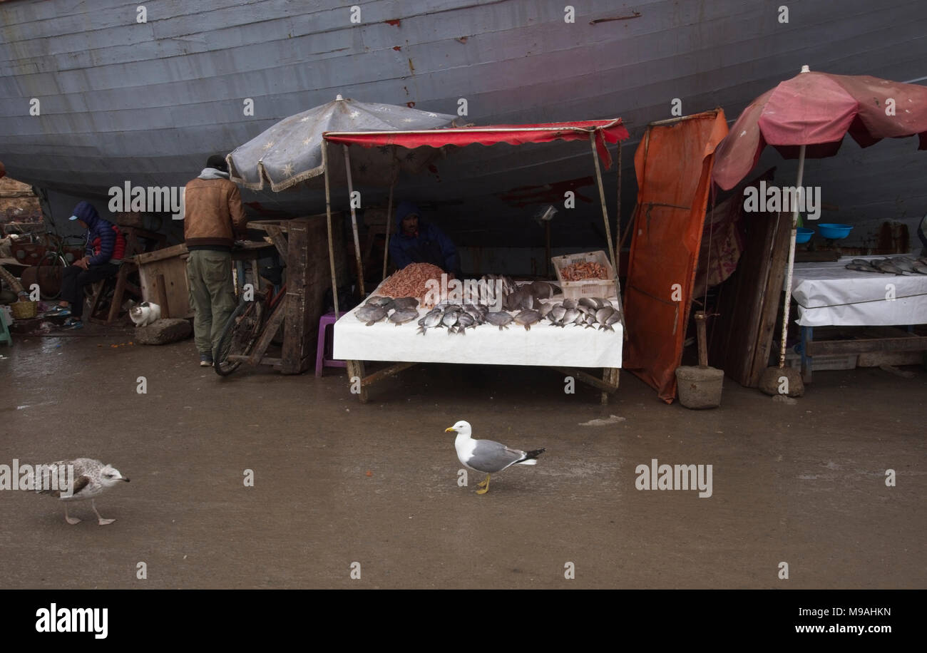Selling fresh fish on stall within fishing port - Stock Image