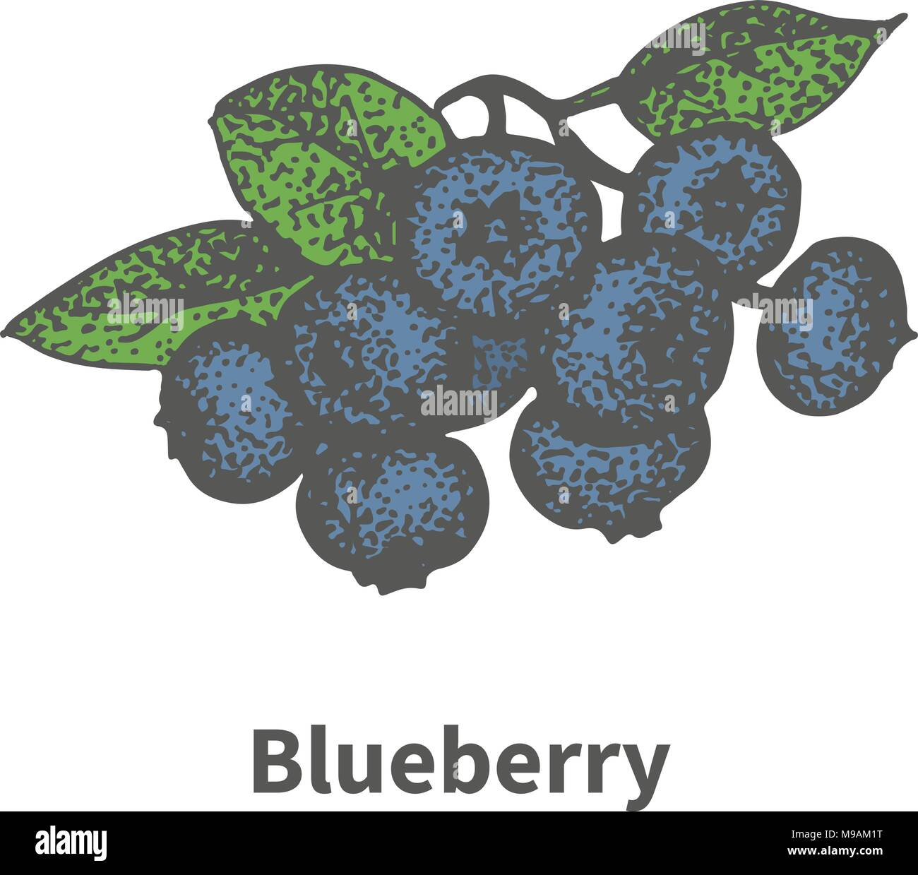 Vector hand-drawn bunch ripe blue blueberry - Stock Vector