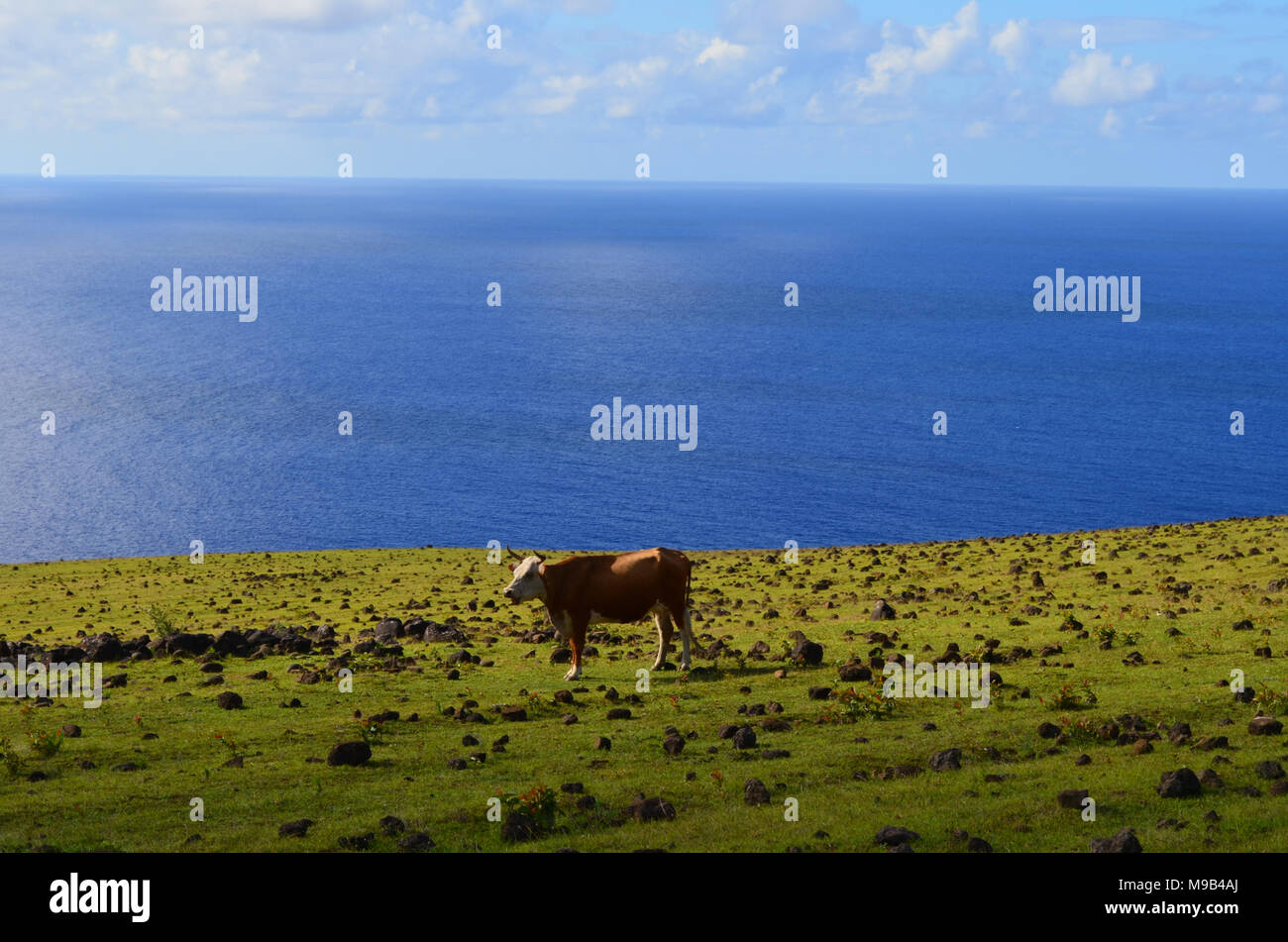 Sea view from the slopes of Terevaka volcano, Rapa Nui (Easter Island) - Stock Image