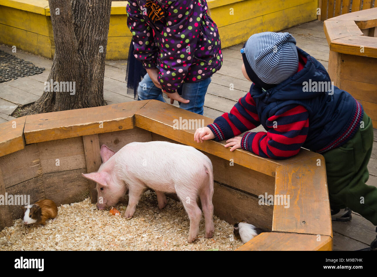 Children toddler boy and girl at petting zoo with little piggy. Child and farm animals - Stock Image