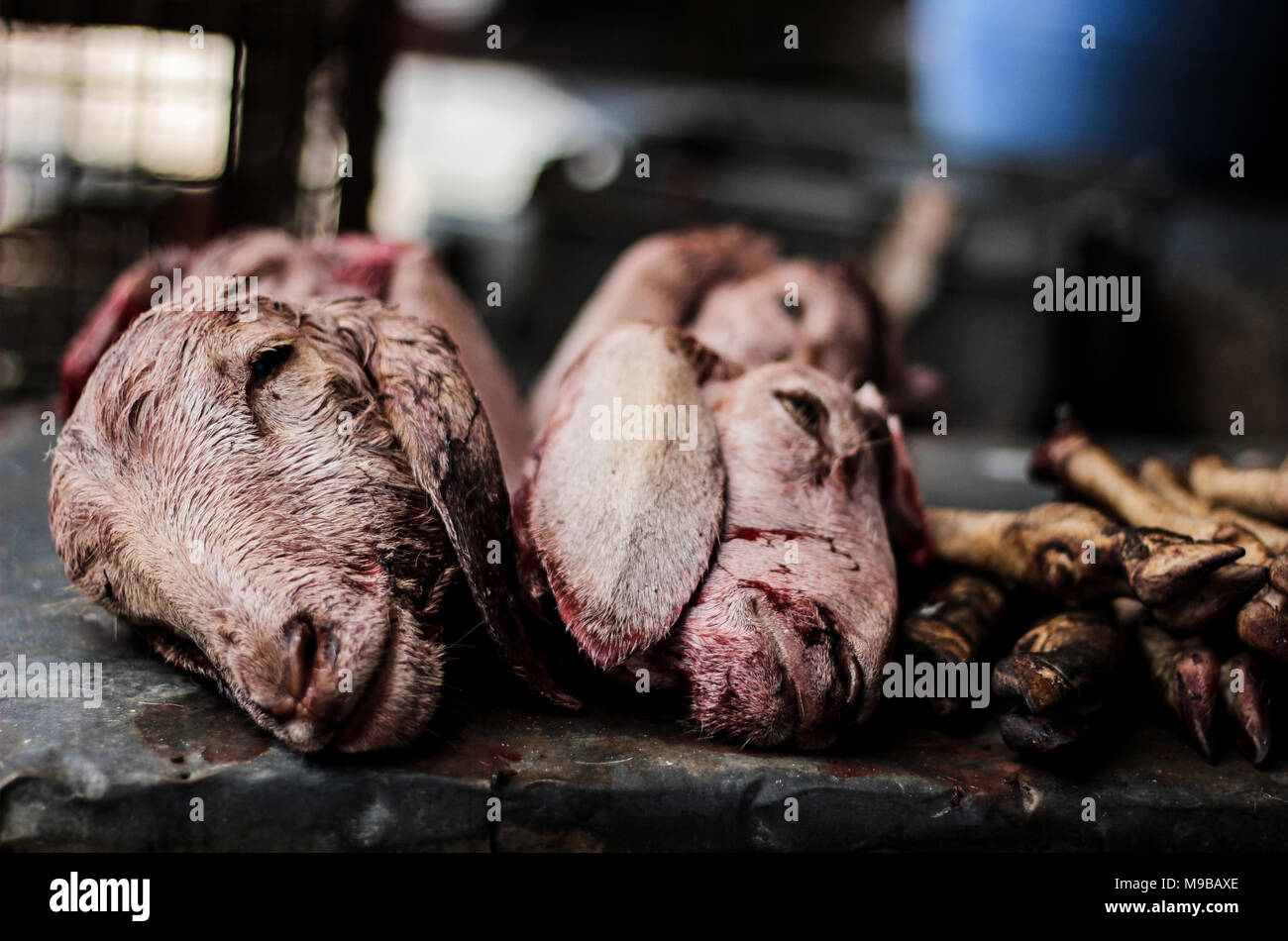 Silence in a slaughter house - Stock Image