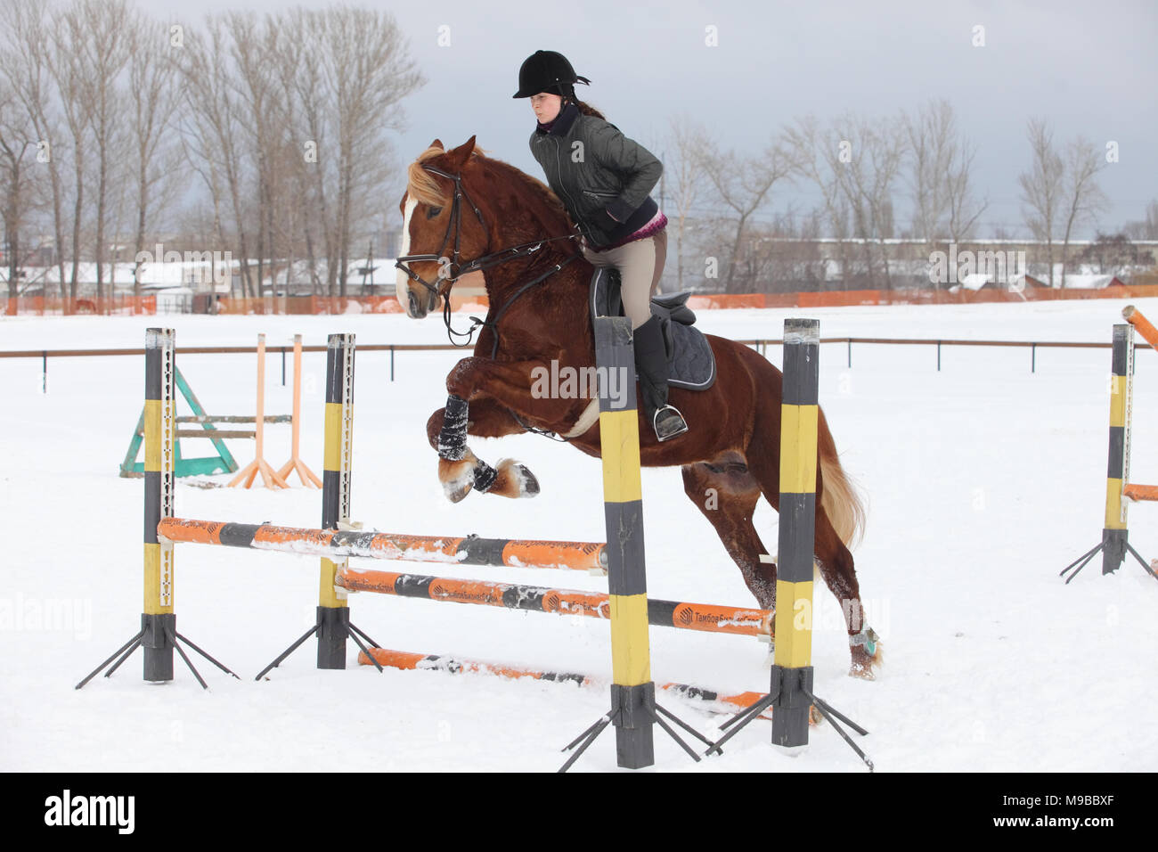 A girl on a horse jumps over the barrier. Training girl jockey riding a horse. A cloudy winter day - Stock Image
