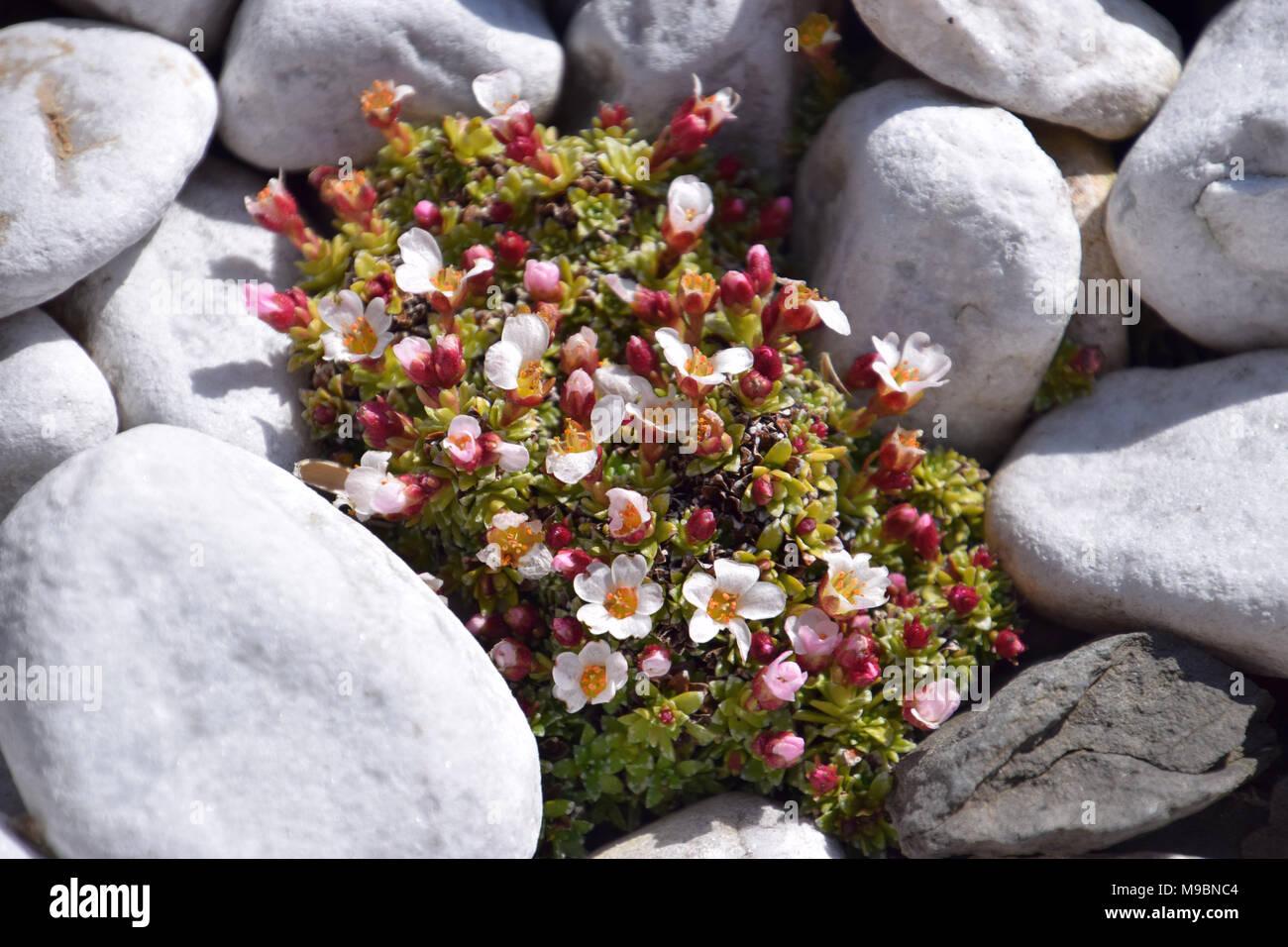 close up view of mini succulent plants - Stock Image
