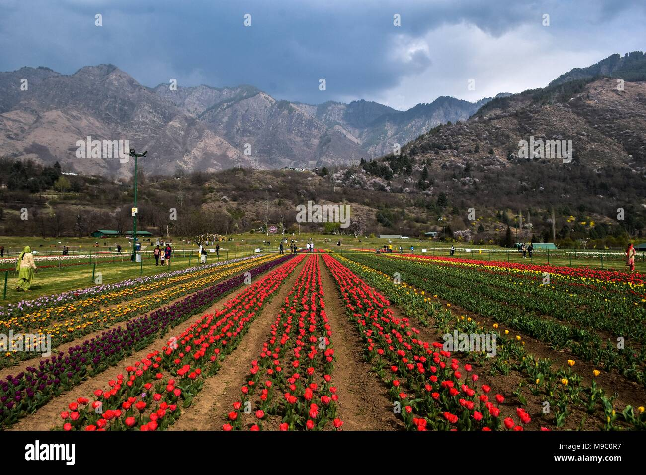 March 24, 2018 - Srinagar, J&K, Jashmir - A general view of Tulip ...