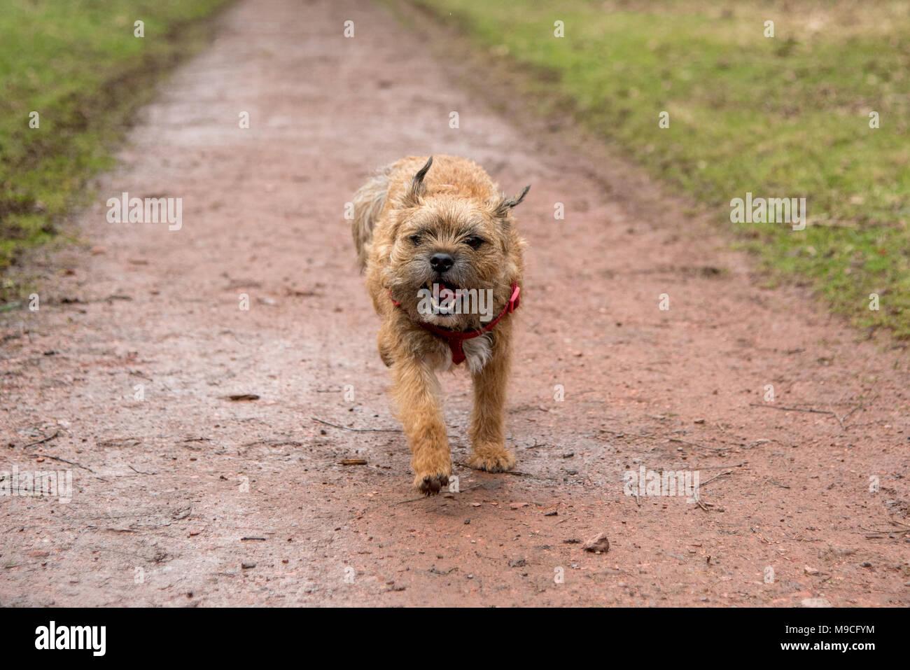 Dog running - Stock Image