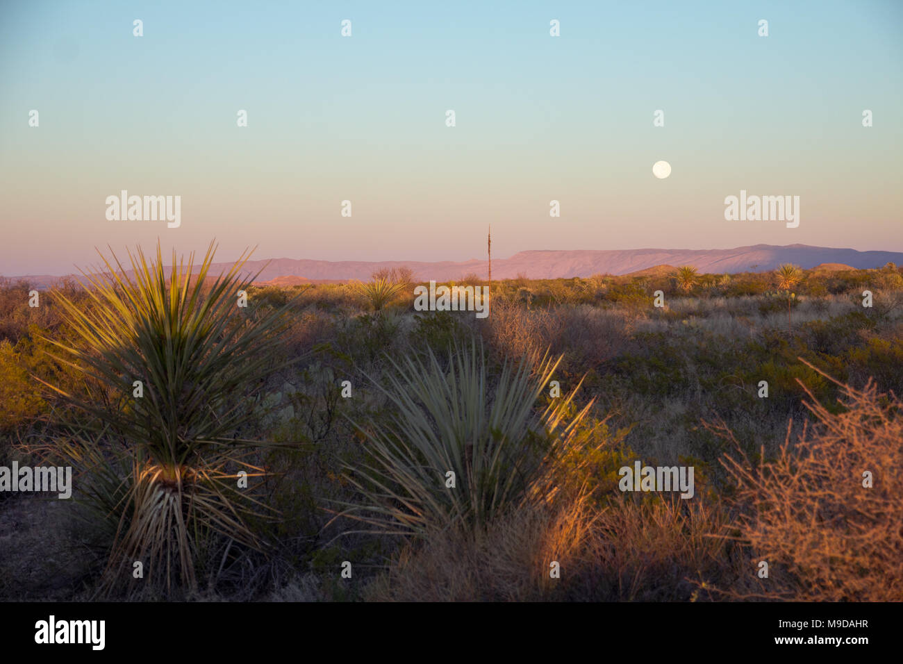 Just before sunset, pink and orange light illuminated hills in the east as a full moon rose above.  Big Bend National Park, TX from the Main Park Road - Stock Image