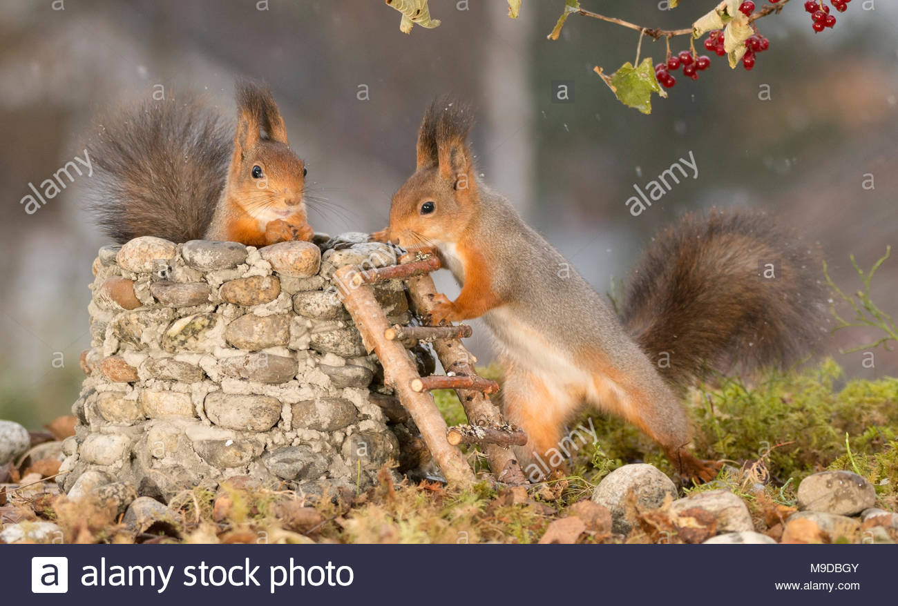squirrels are together with a Wishing Well - Stock Image