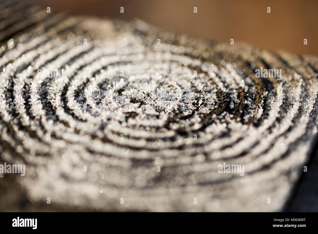 Morning frost in a ring pattern on the top of a cut wooden fence post. - Stock Image