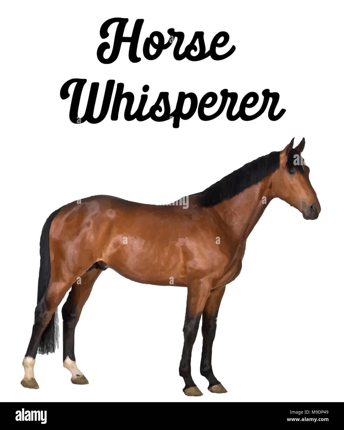 Horse Whisperer Stock Photo