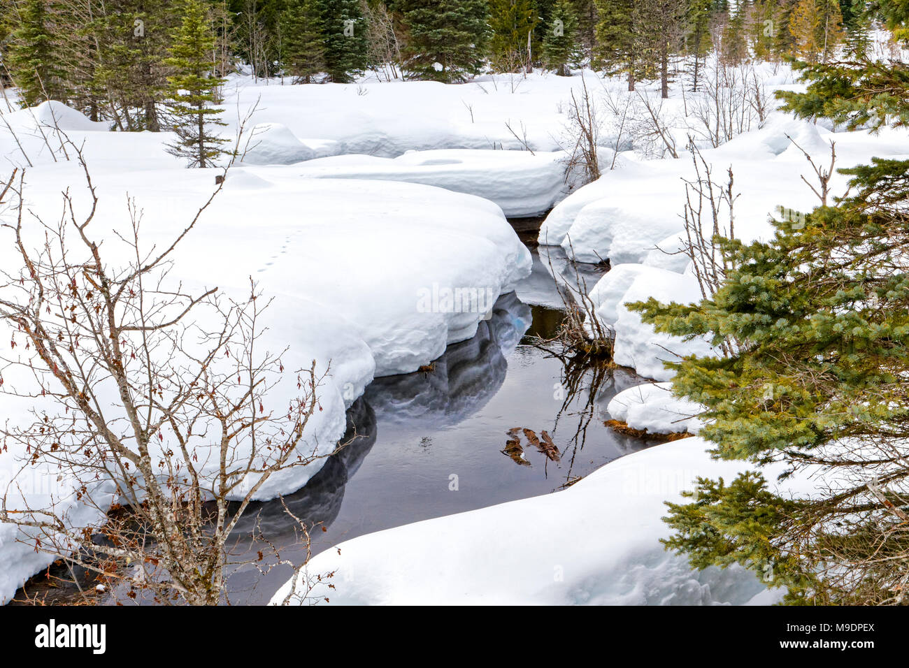 42,780.01165 flowing creek in cold winter running through a deep blanket of soft white forest snow - Stock Image