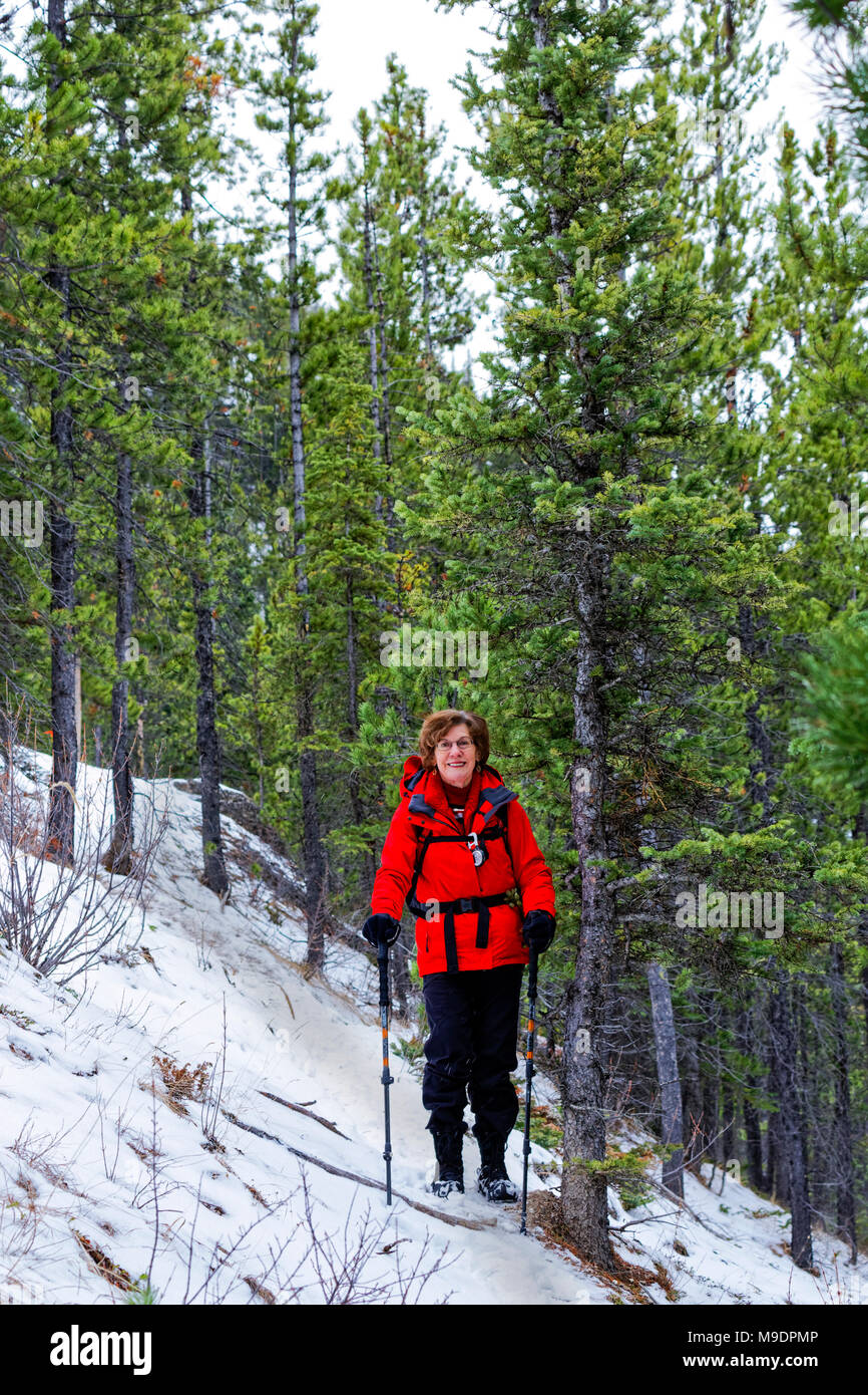 43,107.08527 woman hiking snowy winter trail through conifer tree forest on the way up to Morro Peak near Jasper, Canada - Stock Image
