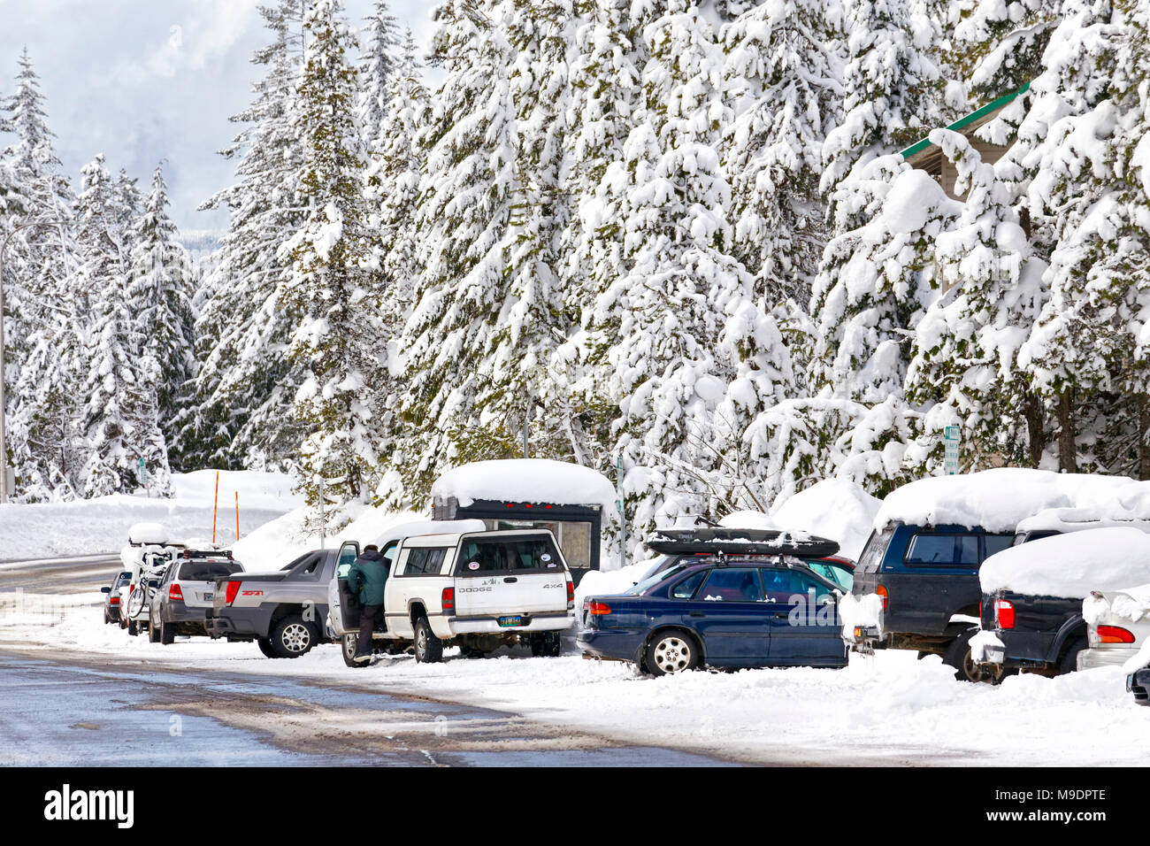 43,160.09727 winter snow-covered road, trees & parked vehicles - Stock Image