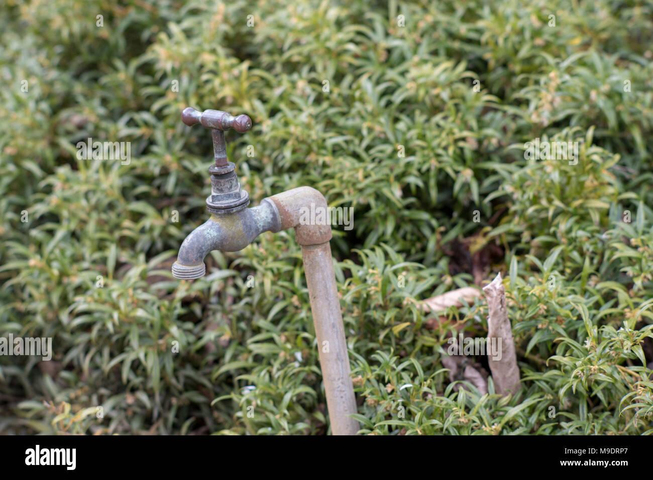 Funky Decorative Garden Faucets Gift - Water Faucet Ideas - rirakuya ...