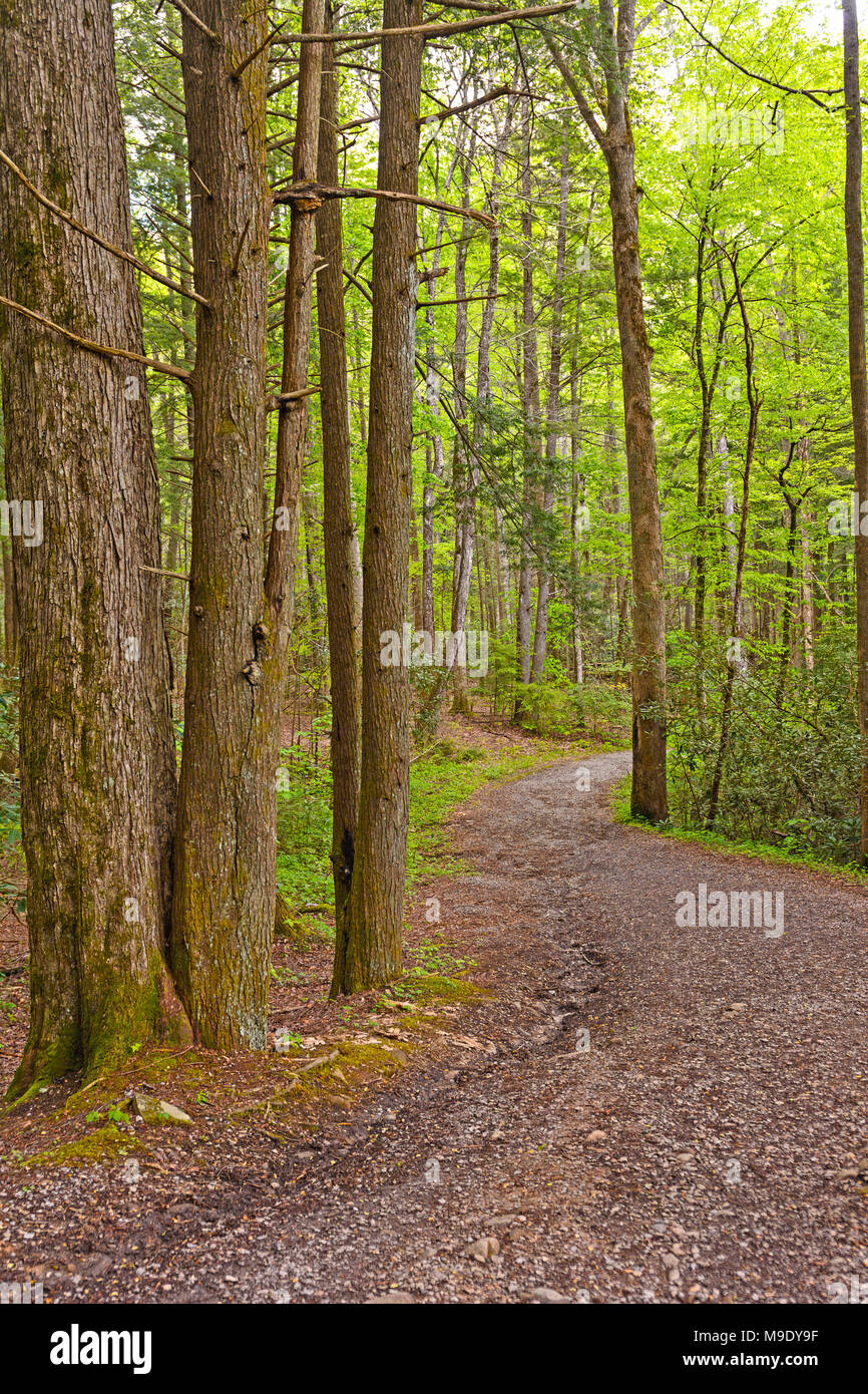 Winding path through the Forest in the Smoky Mountains in Tennessee - Stock Image