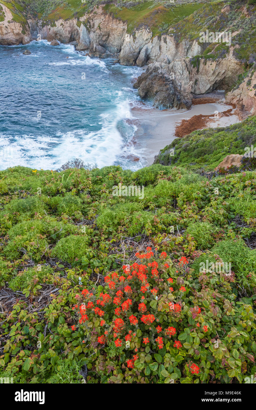 Coast, Garrapata State Park, CA, USA, by Dominique Braud/Dembinsky Photo Assoc - Stock Image