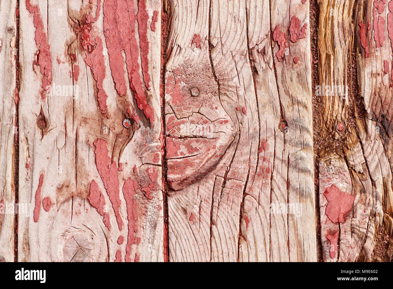 Grunge, weathered vertical wooden planks with a traces of old red or purple paint, nail heads visible - Stock Image