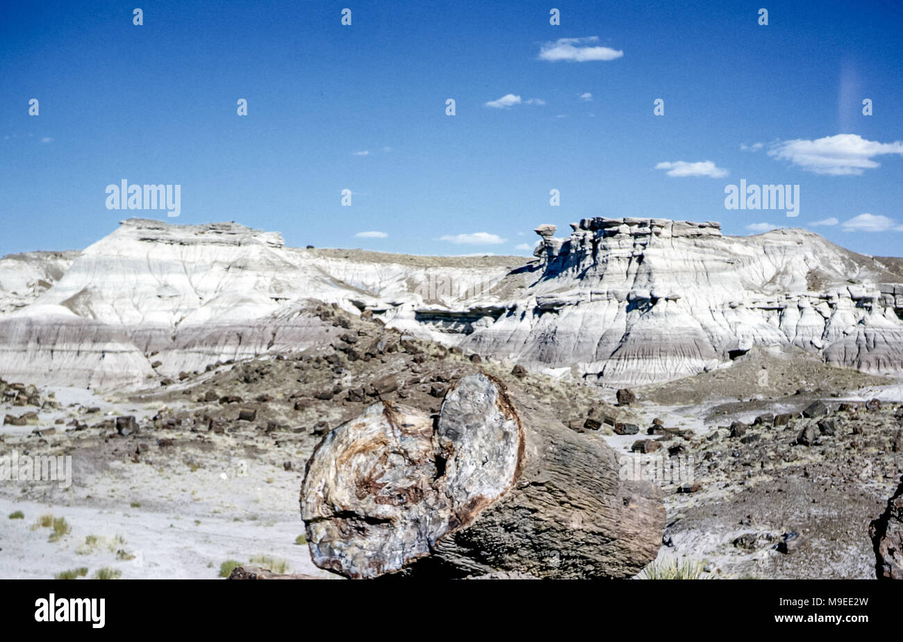Fossilised tree trunk in foreground of Petrified Forest National Park , Arizona, USA, on a sunny day with blue sky.  The tree fossils are Late Triassic Period.  Digital conversion of historical photo taken in 1956 - Stock Image
