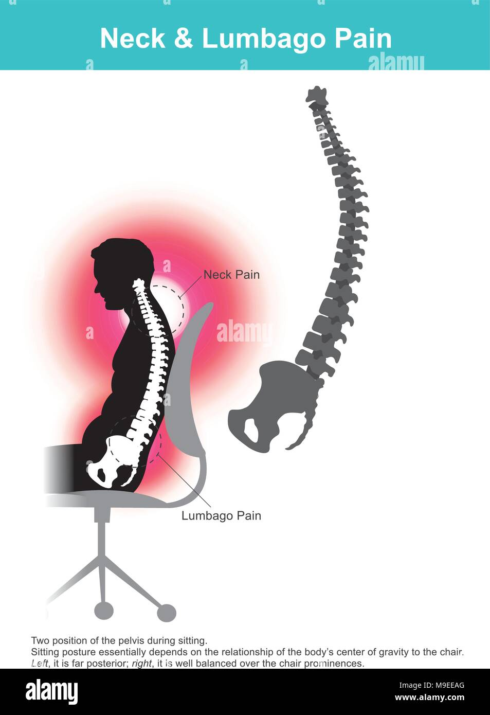 The lumbar region is sometimes referred to as the lower spine, or as an area of the back in its proximity. Stock Vector