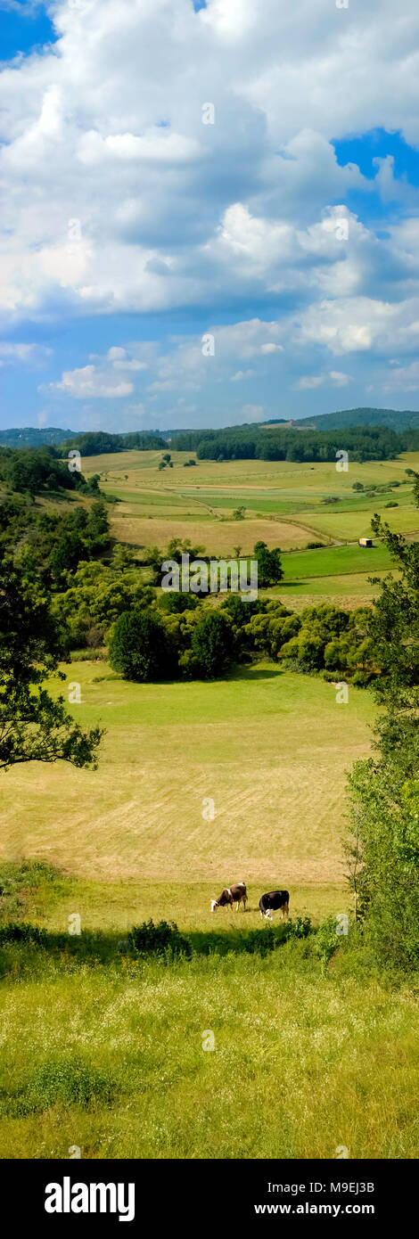 Beautiful highlands landscape on a sunny day with pair of cows on pasture, woods and mountain ridges in the distance and blue sky with clouds. - Stock Image